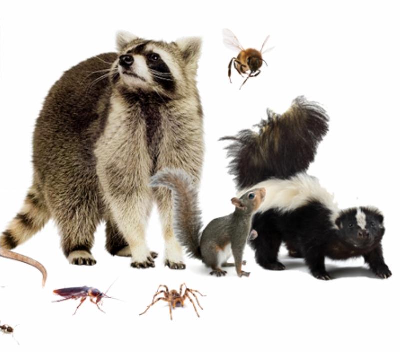 SOS Pest Control Wildlife control