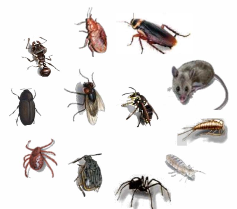 SOS Pest Control pest control